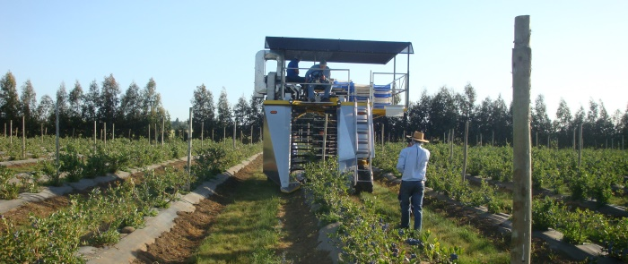 <i>A Littau Harvester machine increases productivity greatly over hand picking.<a href='http://'></a></i>